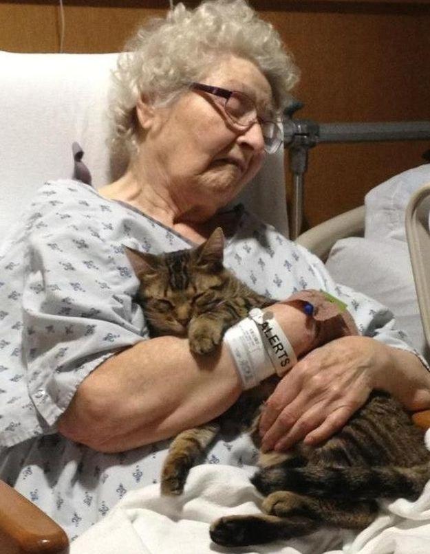 CatsGoldenHearts04 Почему мы любим кошек