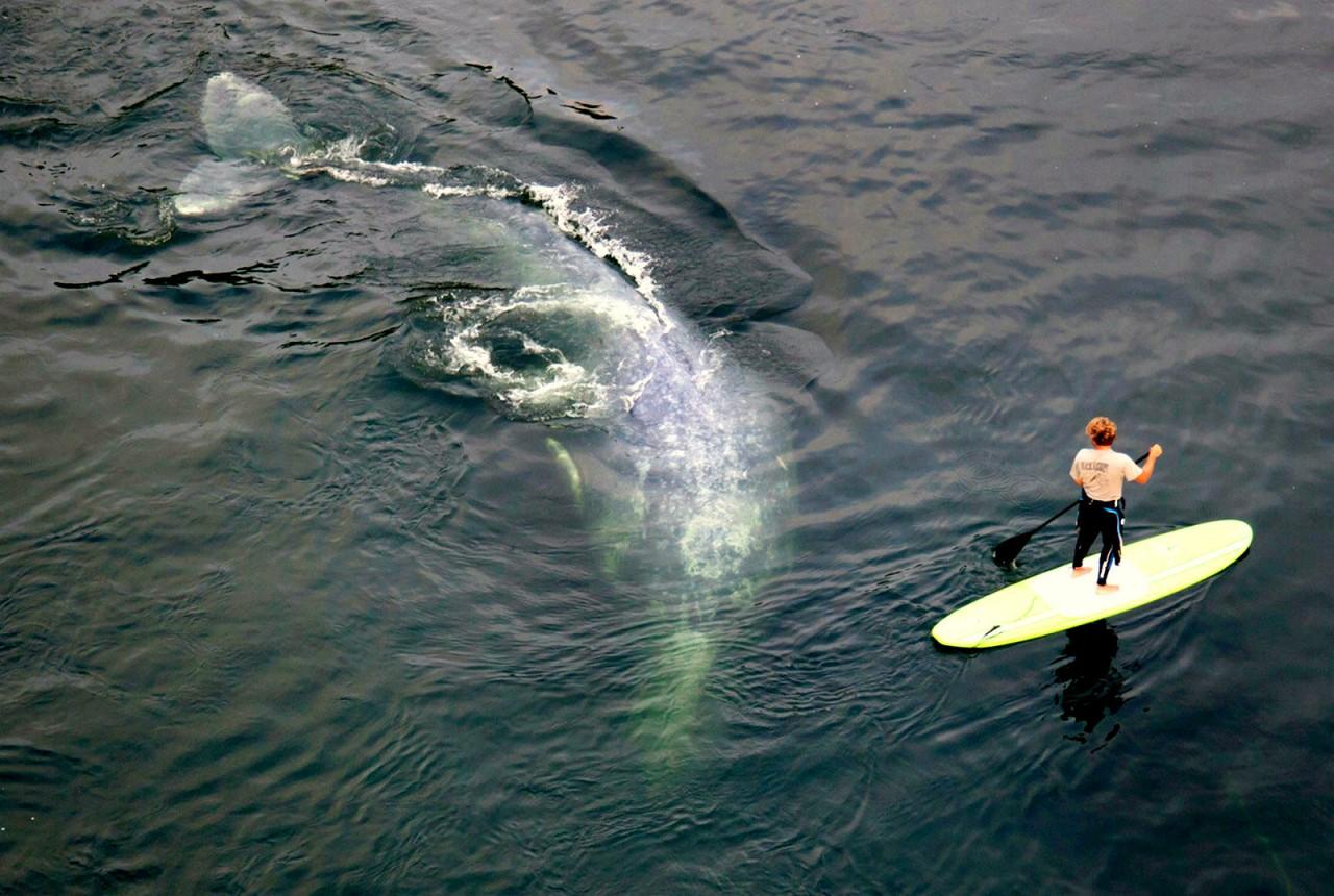 Топ 5: кит атакует!
