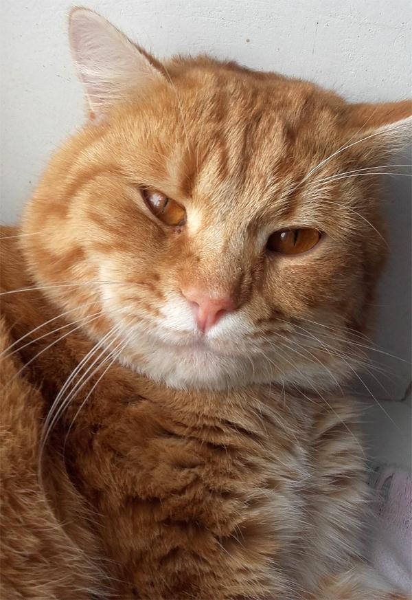 Непростая судьба кота Василия