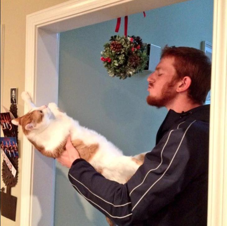 Кошки, которые ненавидят Рож…