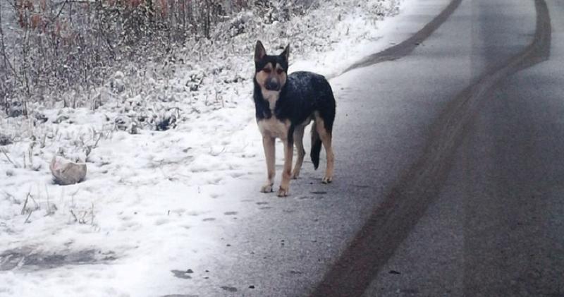 Мордовский Хатико: брошенный пес целый месяц не сходил с места в ожидании хозяина
