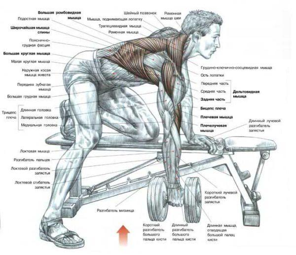 Как сделать широкую спин