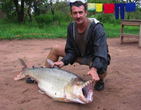 Тигровая рыба-голиаф — самая опасная пресноводная рыба