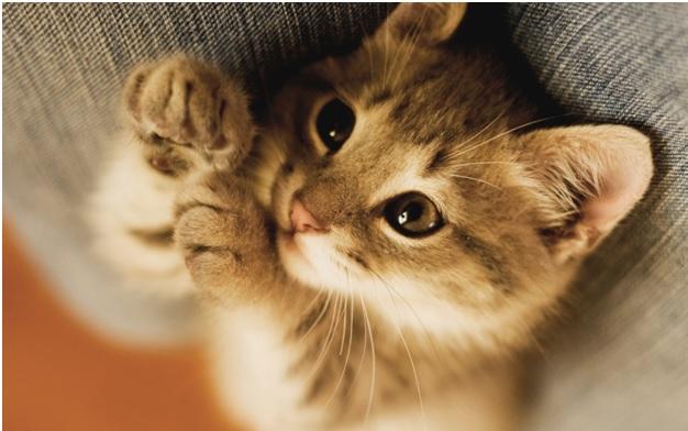 Кот-двоеженец