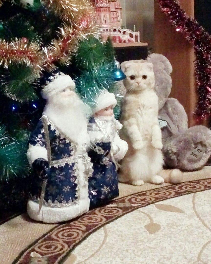 Маскировка уровень: Дед Мороз