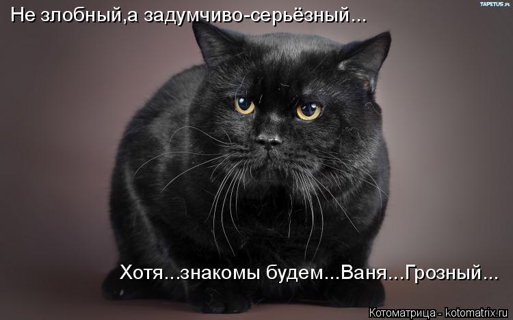 Котоматрица: Не злобный,а задумчиво-серьёзный... Хотя...знакомы будем...Ваня...Грозный...
