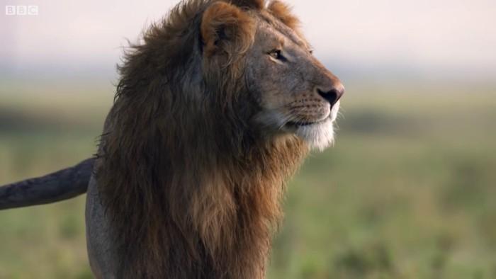Лев чуть не проиграл бой про…