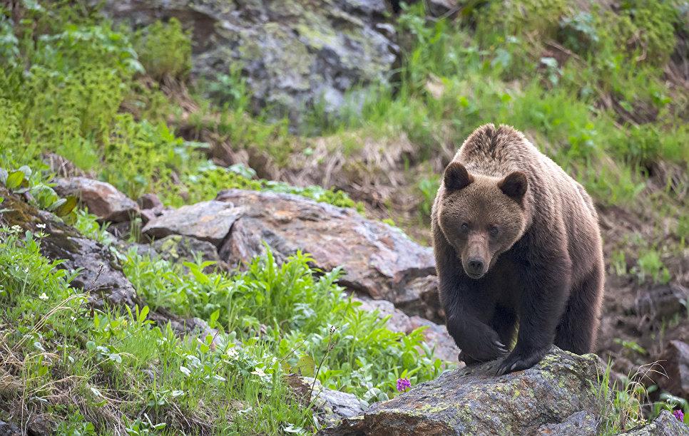 Пожилой японец отбился от нападения медведя с помощью карате