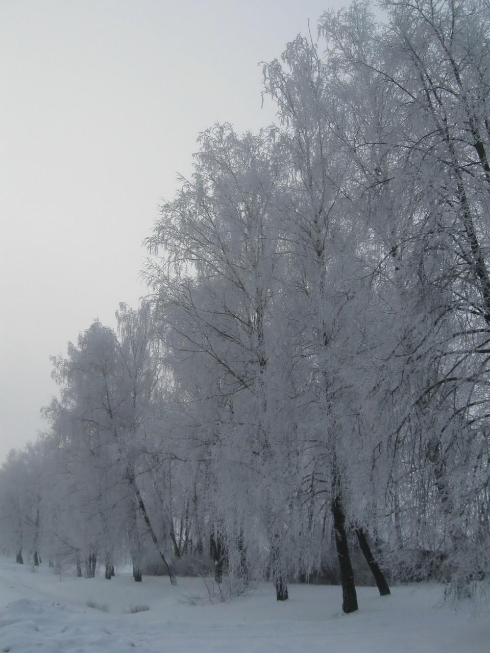Какую зиму мы ждем?
