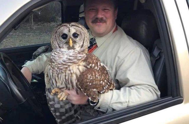 В Мэриленде полицейский спас сову