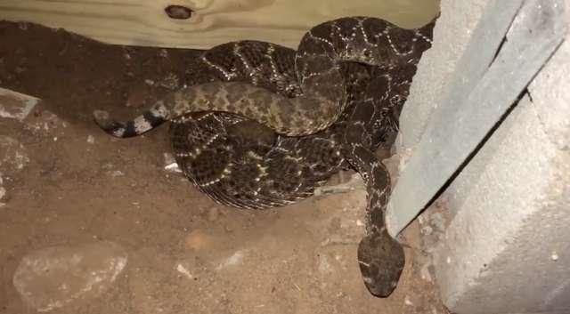 Спустившись в подвал своего дома, мужчина заметил какое-то шевеление на полу… И лучше бы он этого не видел!