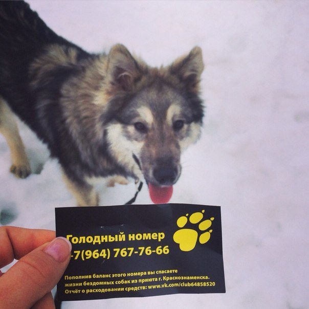 Начинаем день с добра  в приюте г.Краснознаменска содержится около 90 собак....