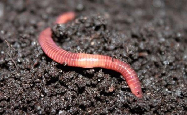 Самостоятельное выращивание червей для рыбалки.  (Часть1)