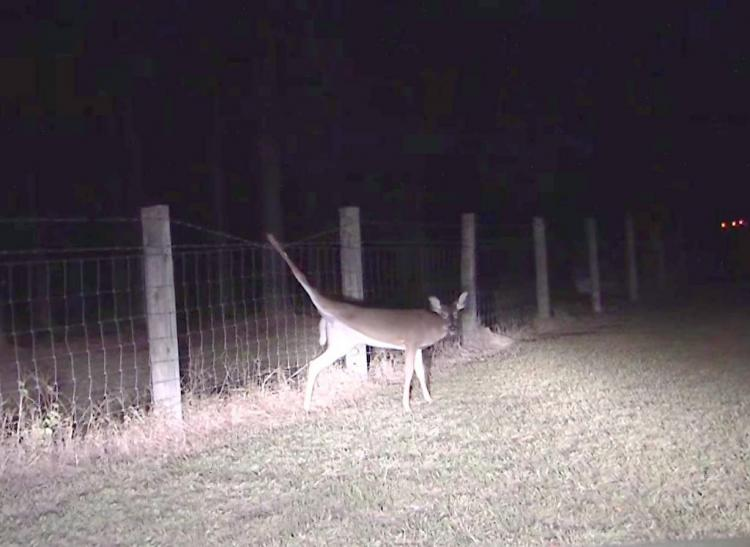 Добрый поступок охотника, который не воспользовался своим шансом на легкую добычу