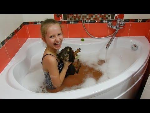 Приколы с животными Смешные коты кошки и собаки Жара в Августе 2017 Bad Baby