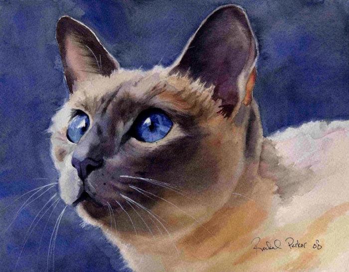Взгляд голубых глаз. Автор: Rachel Parker.