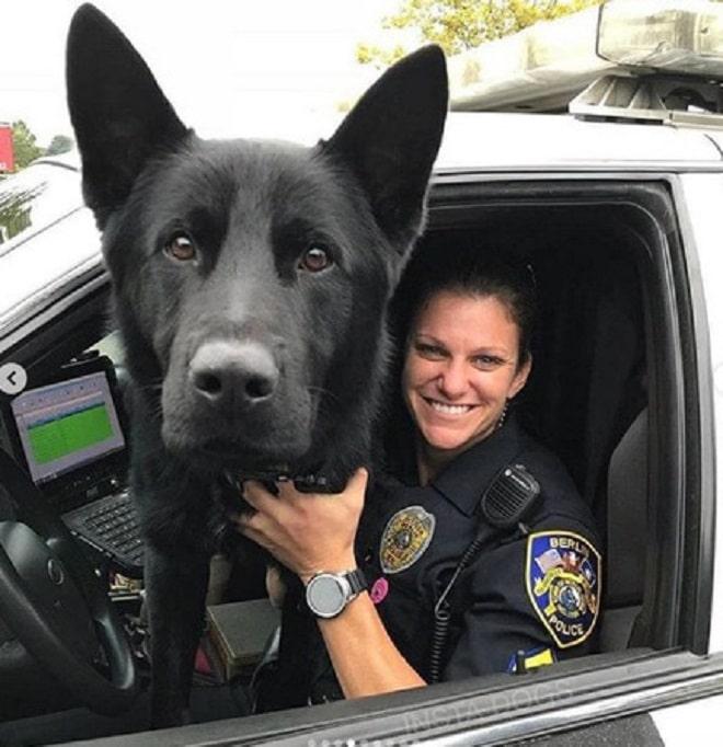 «Пес-гроза преступников»: 10 забавных фотографий собачек, поступивших на службу в полицию