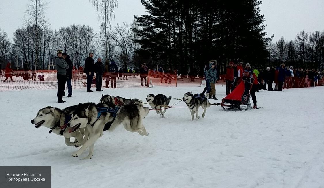 Жители Красноярского края жалуются на разбросанные у дорог трупы бродячих собак