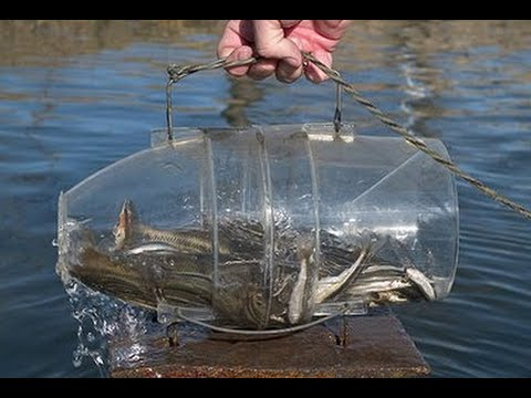 видео как ловят рыбу экранами