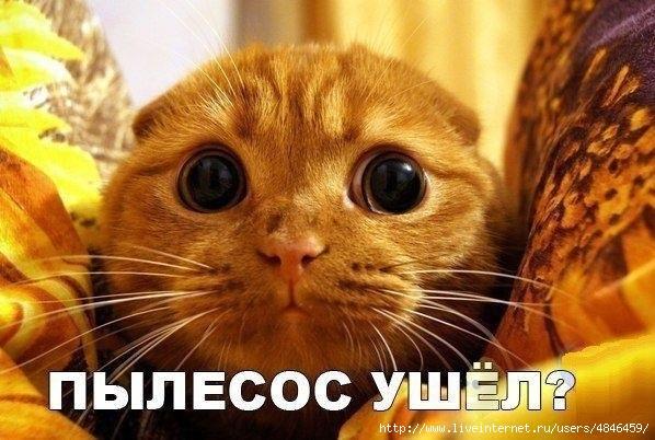 """""""ВСЯ ПРАВДА О КОТАХ-2"""".  ПРИКОЛЬНЫЕ КАРТИНКИ С НАДПИСЯМИ."""
