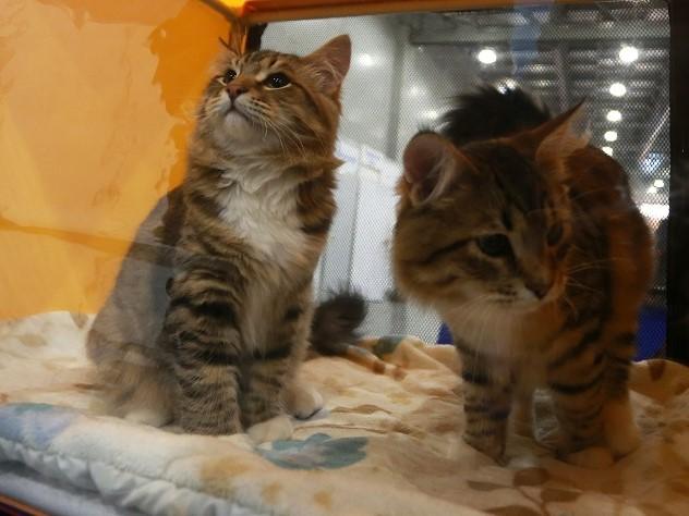 Челябинские веганы на неделю закрыли котов в машине