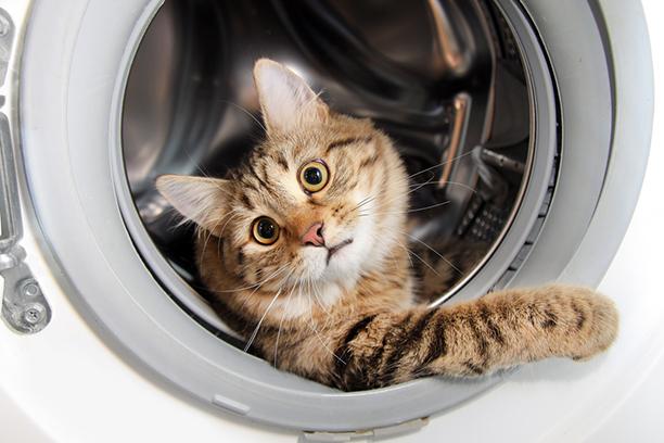 Куда исчезают коты?