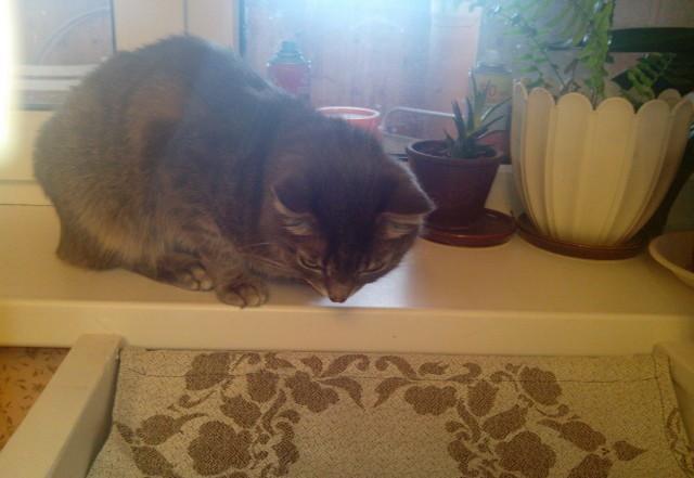 Лежанка для кота