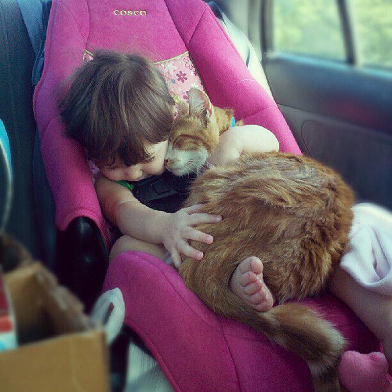 CatsGoldenHearts35 Почему мы любим кошек