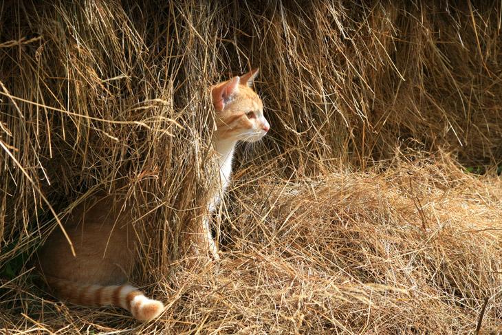 Мой ласковый и нежный зверь: как кошки захватили мир