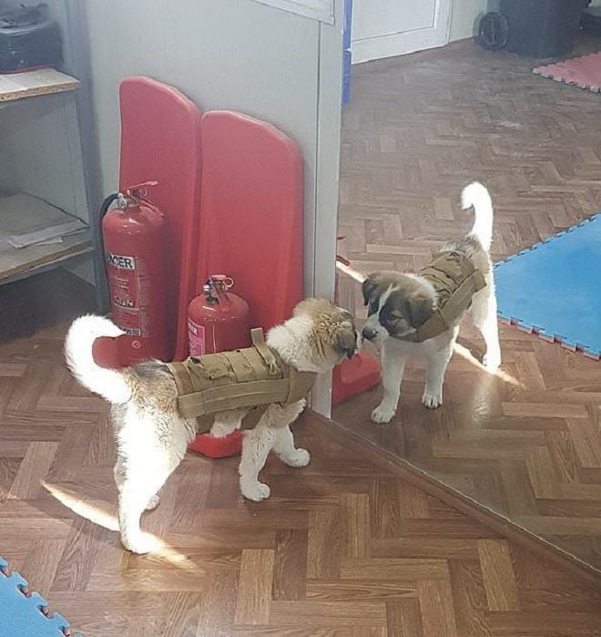 Британский солдат, спасший щенка из-под рухнувшего здания, встретился с ним только через семь месяцев!