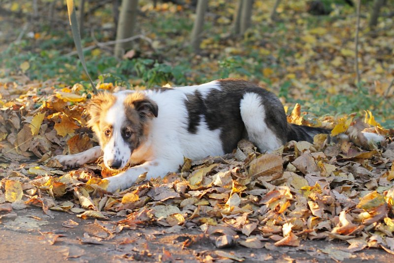 Собаку крепко привязали к мусорному баку и бросили мусорный бак, пес, собака