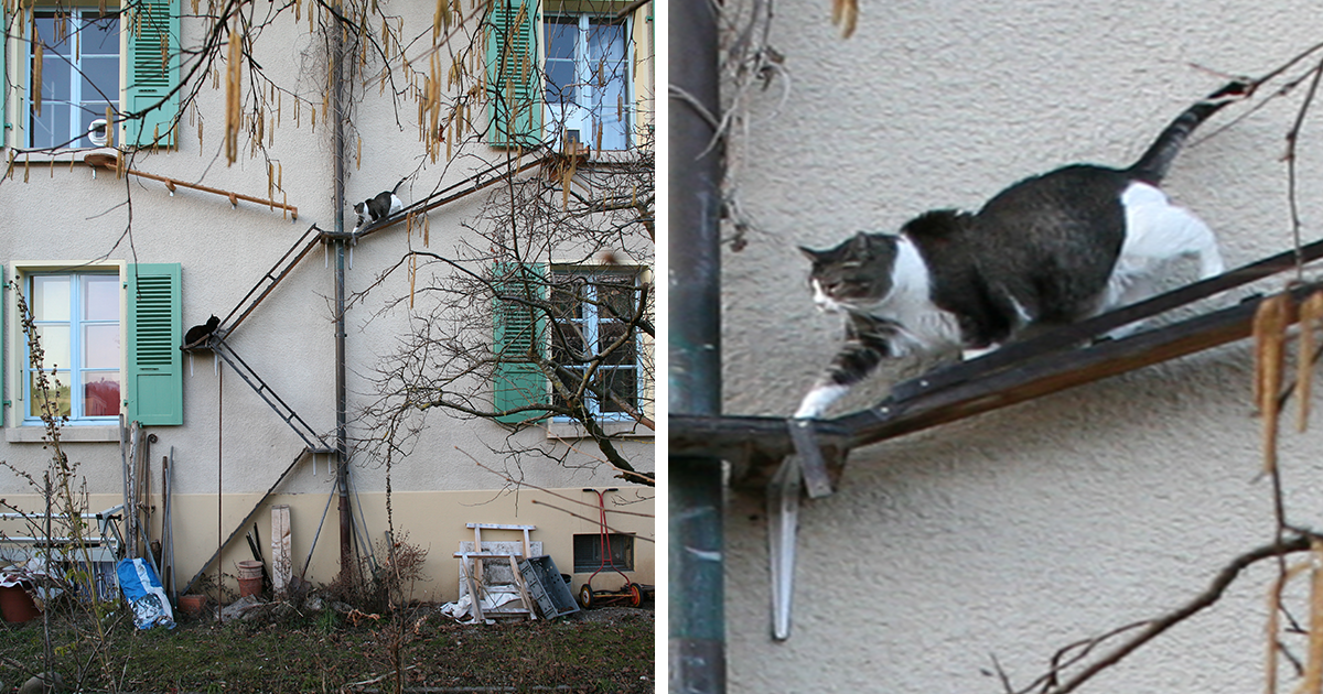 22 Charming Cat Ladders In Switzerland Documented By Graphic Designer Brigitte Schuster