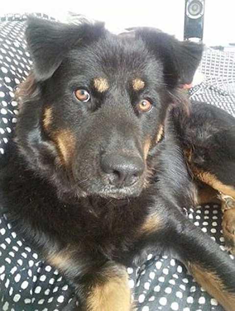 Вооруженная ножом женщина отбила у 5-метрового питона свою любимую собаку