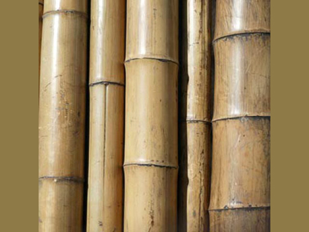 bamboo_pole (450x338, 95Kb)