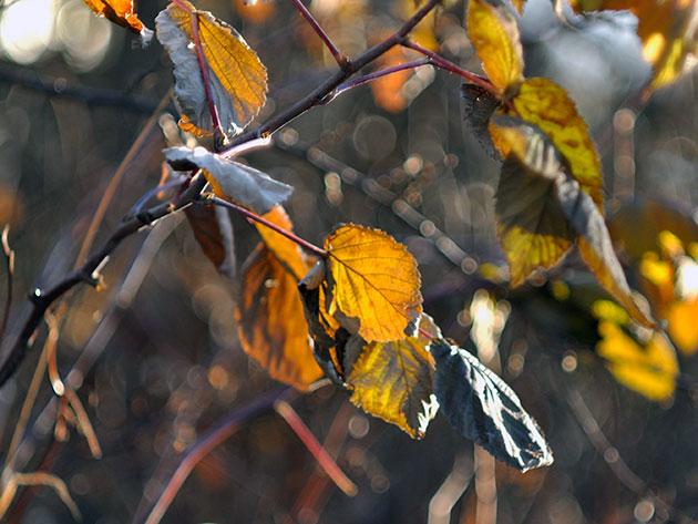 Уход за малиной: самый ответственный период – осень