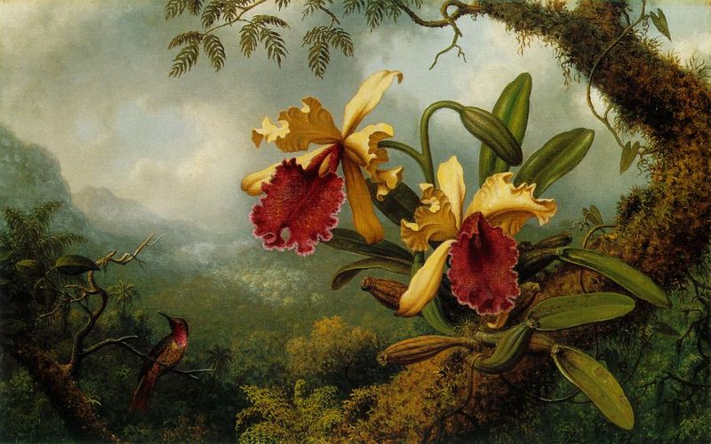 File:Martin Johnson Heade - Orchids and Hummingbird ATC.jpg