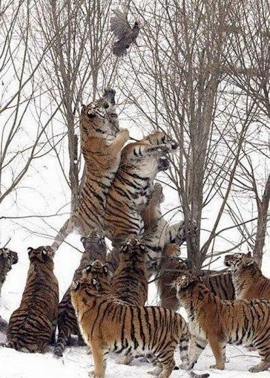 необычные фото животных, которые вас очень удивят))
