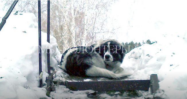 Неравнодушные люди нашли хозяев потерявшейся собаки. Пес неделю ждал хозяев на улице