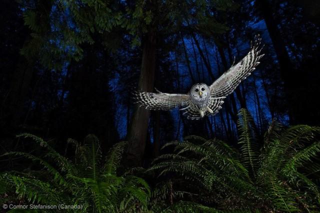 Забавные фото победителей конкурса Wildlife Photographer of the Year (3)