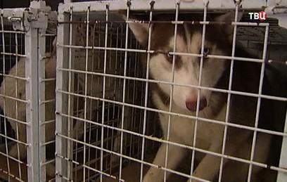 В Петербурге задержали хозяек покусавших ребенка собак