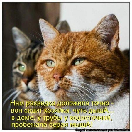 1415168692_kotomatritsa_ms (450x450, 135Kb)