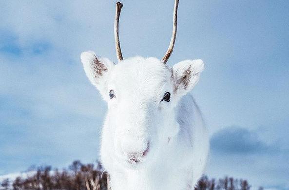 В Норвегии найден самый белы…