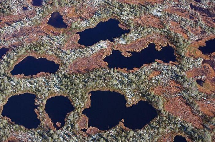 Площадь болот Архангельской области составляет около 82 тыс. км. кв.