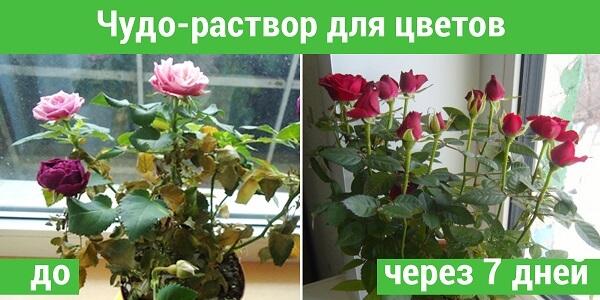 Древесная зола для подкормки домашних растений