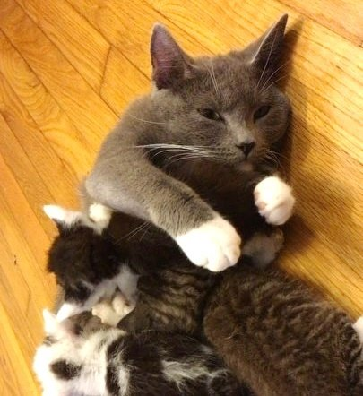 Пятеро котят плакали без остановки… Их мама пропала, а они замерзали на улице