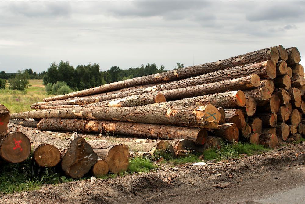 Матвиенко предложила ввести эмбарго на вывоз леса