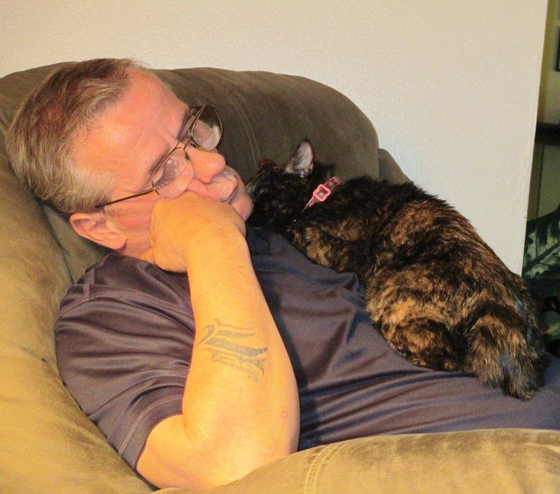 CatsGoldenHearts20 Почему мы любим кошек