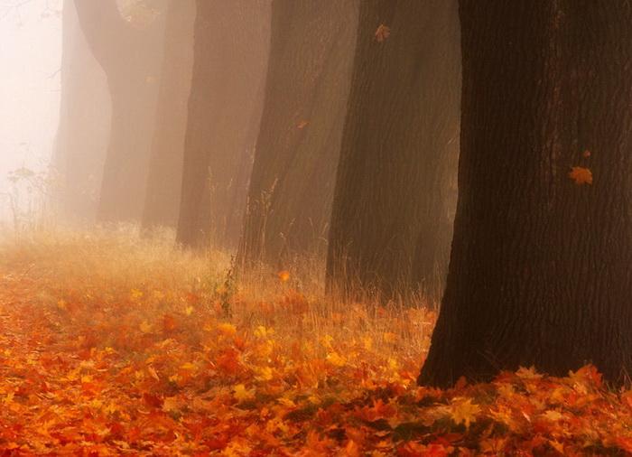 Невероятно красивая природа: кленовая аллея фотографа Przemysław Kruk