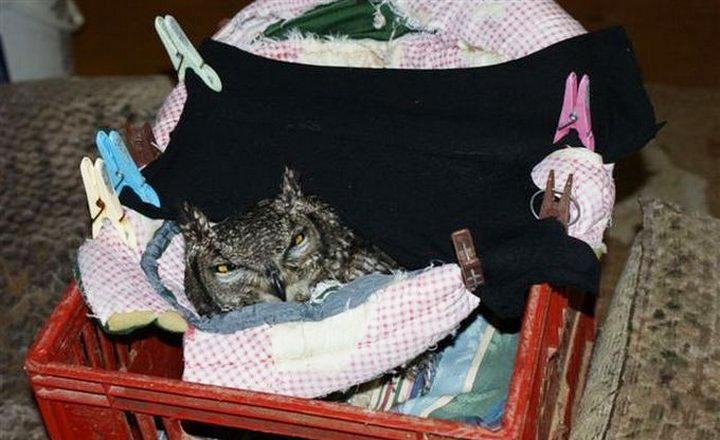 Парень спас раненую сову и от того, как она его отблагодарила, я потерял дар речи!