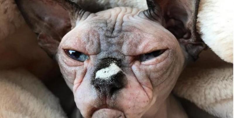 Самый жуткий в мире кот стал звездой instagram